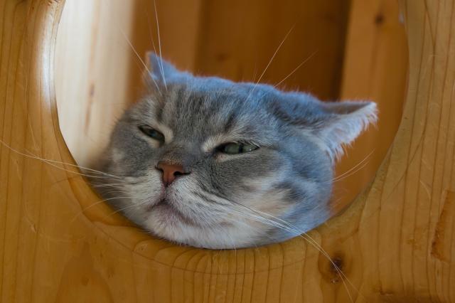ねこんかつ:体験談:猫好き・ねこを囲んだ和やか『ねこんかつ:猫婚活』